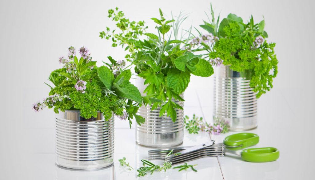 horta lata 1024x585 - Como Fazer uma Horta Orgânica de Temperos