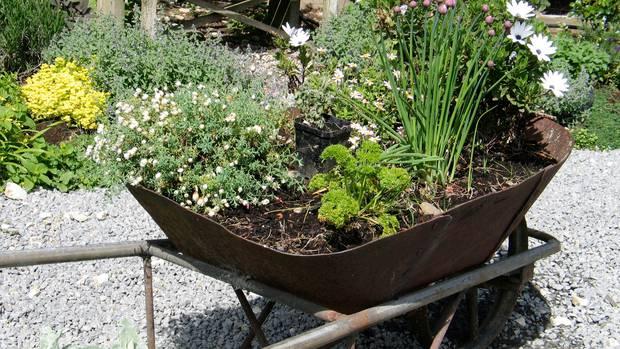 hortinha carriola - Como Fazer uma Horta Orgânica de Temperos