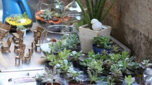 Suculentas: 18 Dicas para Cuidar e Montar o Seu Jardim