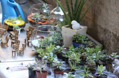 Suculentas: Como Cuidar e Montar seu Jardim