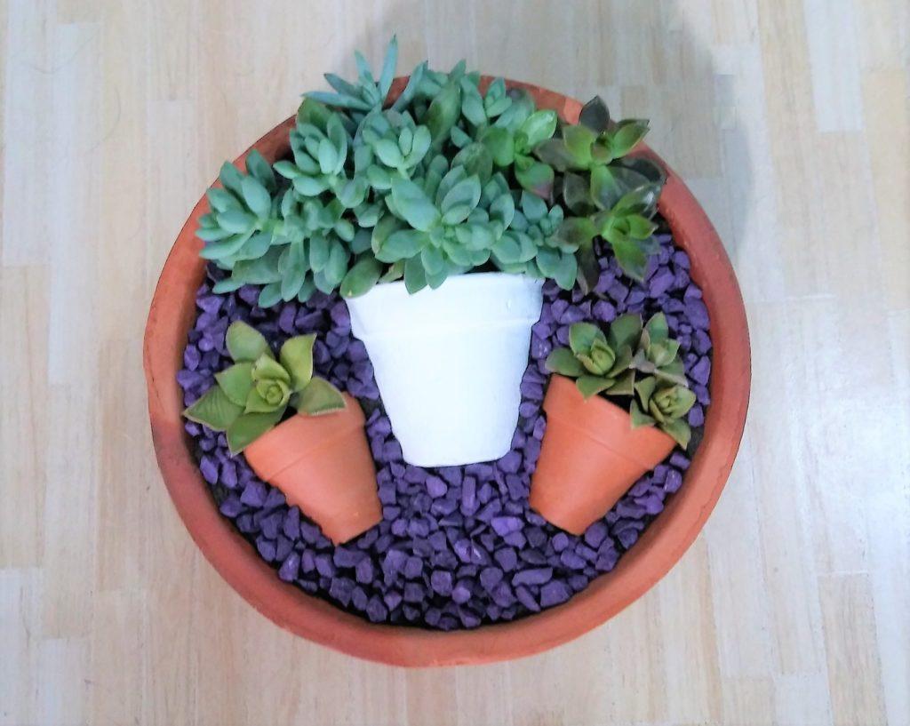 Vaso de vasos Suculentas 1024x817 - Suculentas: Como Cuidar e Montar seu Jardim