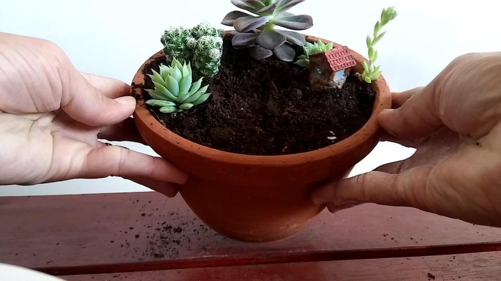 harmonize as plantas 1024x576 - Mini Jardim: 8 Passos para Montar o Seu