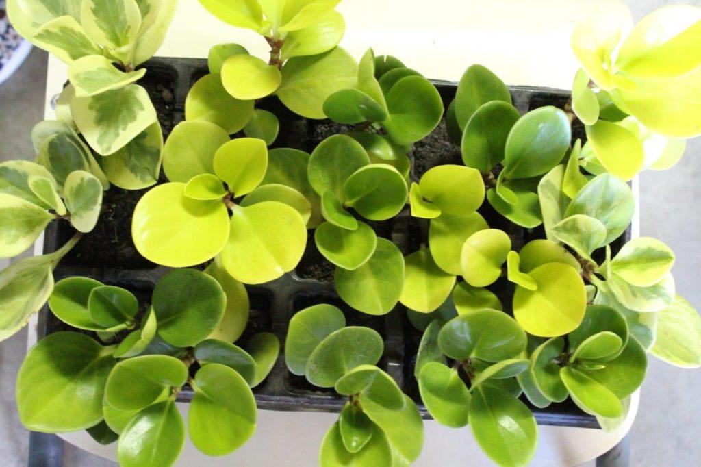 plantas bem cuidadas 1024x682 - Mini Jardim: 8 Passos para Montar o Seu