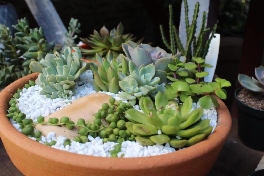 suculentas lindas 1024x682 - Suculentas: Como Cuidar e Montar seu Jardim