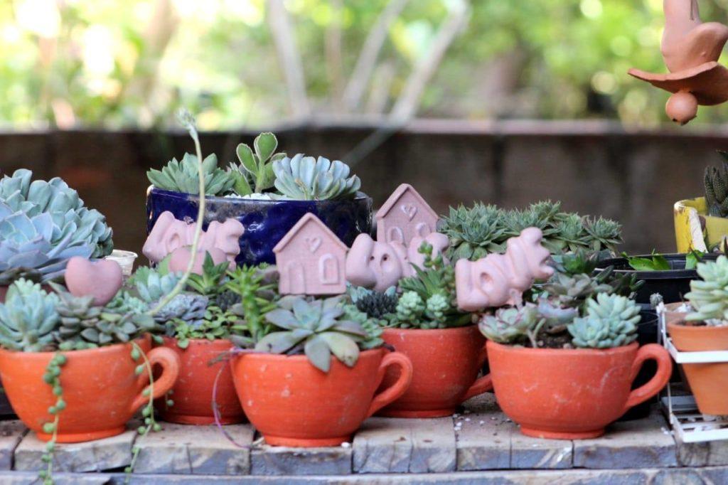 suculentas vasinho 1024x682 - Suculentas: Como Cuidar e Montar seu Jardim