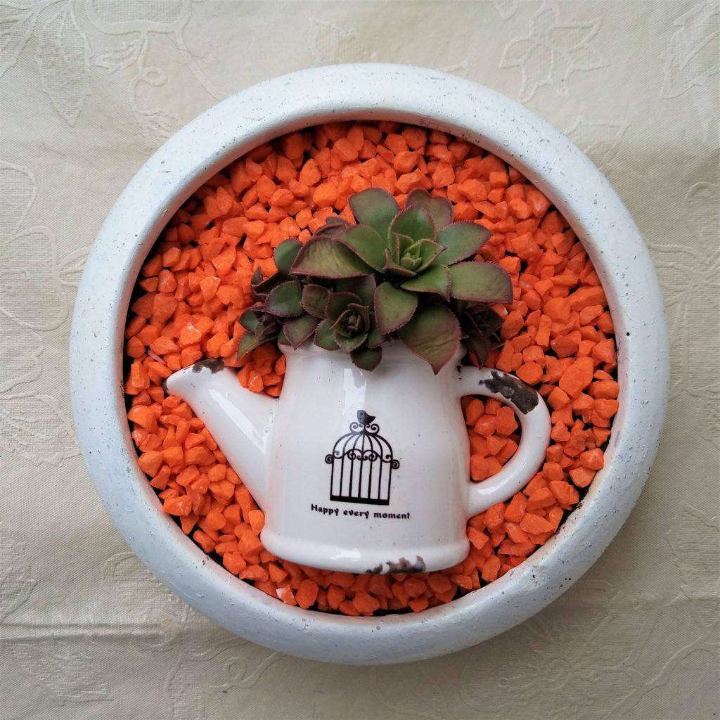 vasinho suculentas 1024x1024 - Suculentas: Como Cuidar e Montar seu Jardim