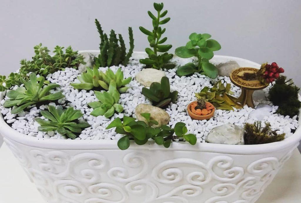 vaso branco suculentas 1024x691 - Suculentas: Como Cuidar e Montar seu Jardim