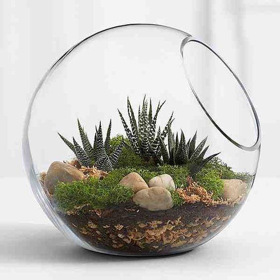 Terrários Como Fazer 1 1 - Arranjos em vidro: Como Fazer Utilizando Suculentas e Cactos