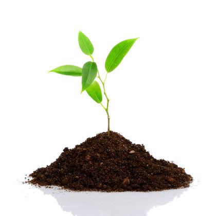 Terra - Substrato para plantas: Afinal o que é substrato?