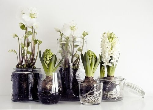 caminha das plantas - Substrato para plantas: Afinal o que é substrato?