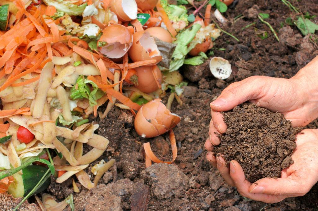 compost pile 1024x682 - Substrato para plantas: Afinal o que é substrato?