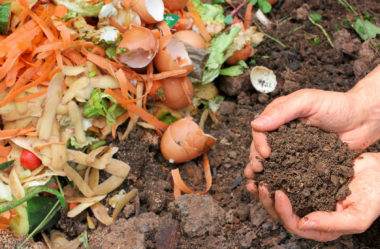 Substrato para plantas: Afinal o que é substrato?