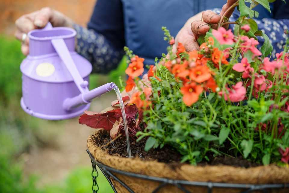 jardim 1 - Substrato para plantas: Afinal o que é substrato?