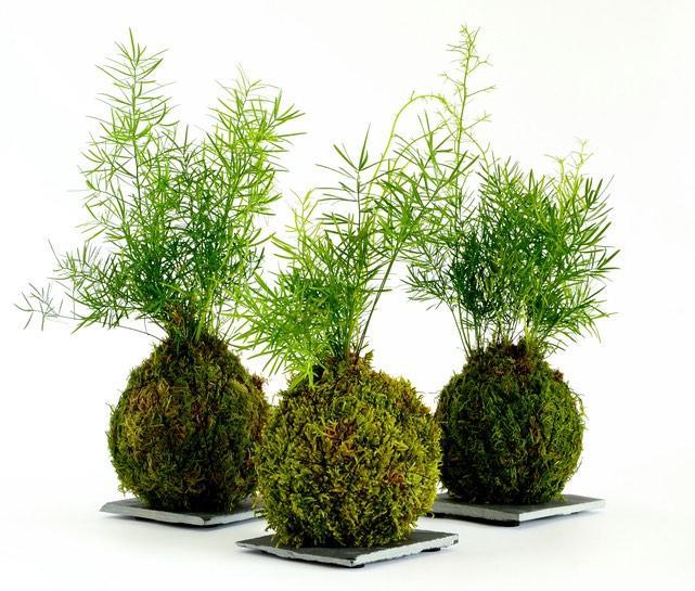 kokemama minigarten - Kokedama: Como fazer uma em 8 passos