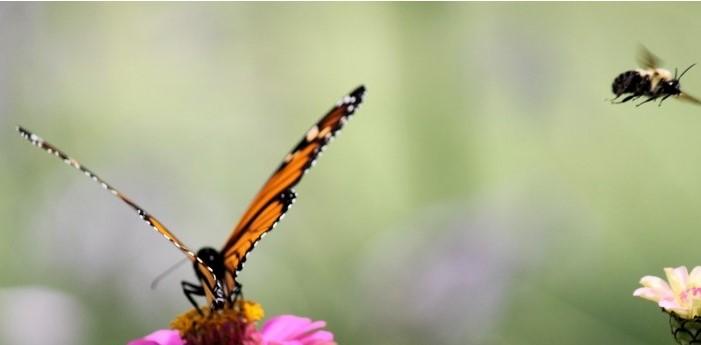 borboletas e abelhas 2 - Flores únicas para o seu jardim