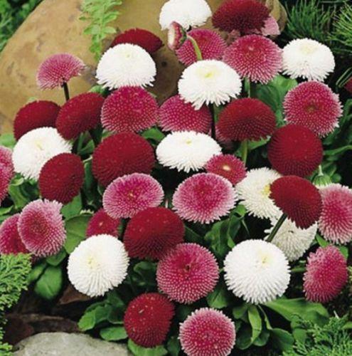 coloridas - Flores únicas para o seu jardim