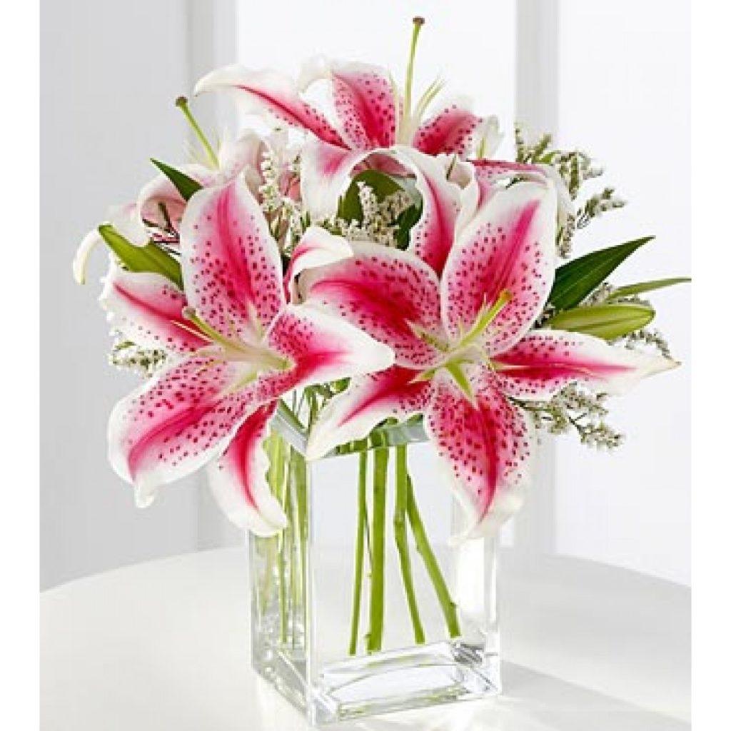 em vasos 1024x1024 - Lírios: Como cultivar em sua Casa
