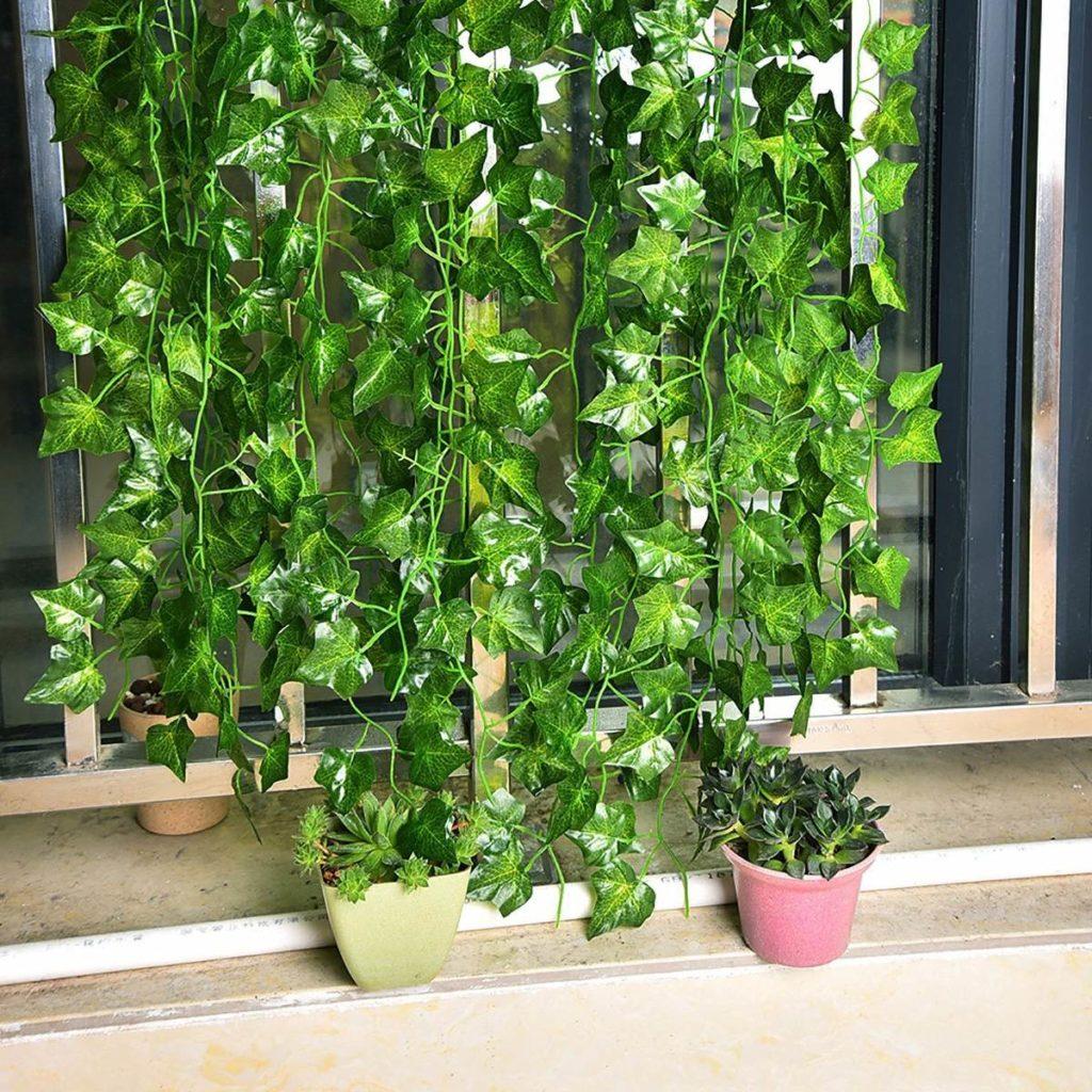 forração de janelas 1024x1024 - Hera Inglesa: Conheça essa plantinha