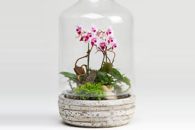 mini orquidea - Conheça 13 Plantas de Terrário Fechado