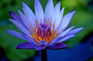 Qual a flor mais bonita do mundo?