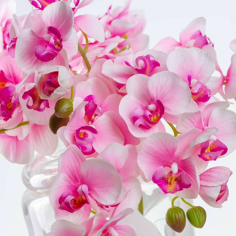 orchidea - Qual a flor mais bonita do mundo?
