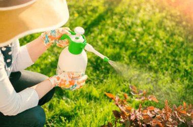 Controle de pragas e fungos: Conheça 4 Receitas
