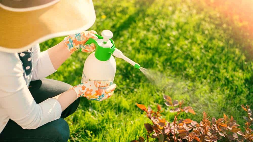 Inseticidas naturais - Controle de pragas e fungos: Conheça 4 Receitas