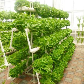 hidropônico 1 - Como Fazer um Jardim Vertical