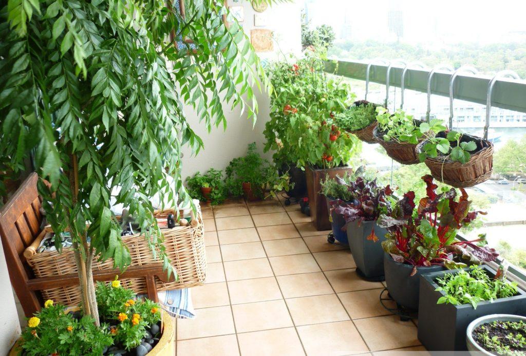 jardim urbano 1 1024x693 - Jardim em APARTAMENTO: Como Cultivar