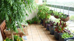 Cultivando na varanda