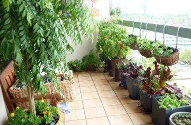 Jardim em APARTAMENTO: Como Cultivar