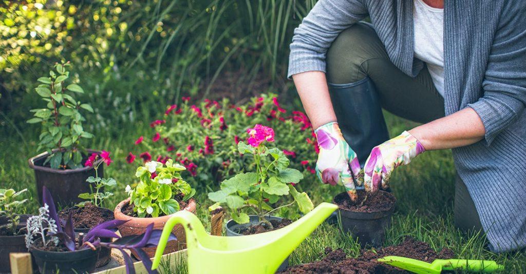 jardinagem 1 1024x534 - JARDINAGEM | Conheça 5 BENEFÍCIOS de Saúde