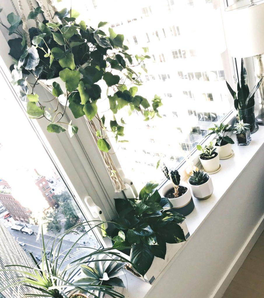 luz solar 1 905x1024 - Jardim em APARTAMENTO: Como Cultivar