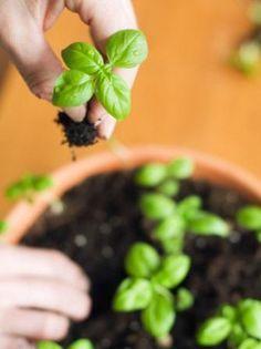3 - 12 DICAS de JARDINAGEM que todo Jardineiro PRECISA SABER