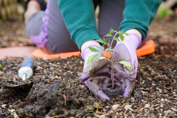 4 - 12 DICAS de JARDINAGEM que todo Jardineiro PRECISA SABER