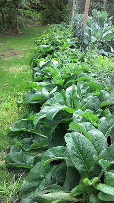 5 - 12 DICAS de JARDINAGEM que todo Jardineiro PRECISA SABER