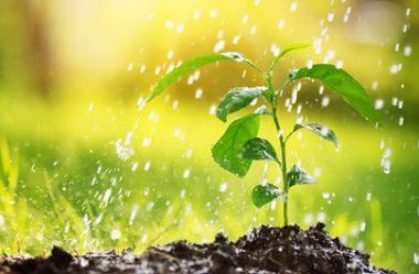 REGAR AS PLANTAS | Quando devo FAZER?