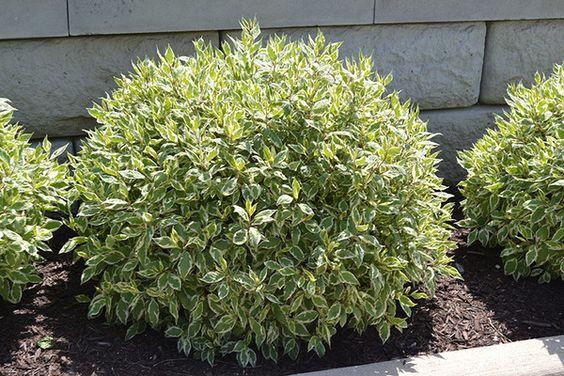 arbustos - PÁSSAROS no Jardim | 5 PASSOS para Atrair