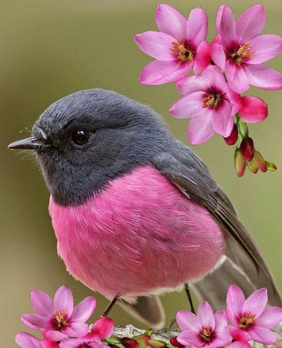 birds - PÁSSAROS no Jardim | 5 PASSOS para Atrair