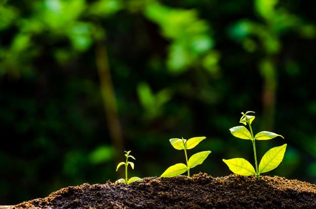 fertilizantes 2 - 12 DICAS de JARDINAGEM que todo Jardineiro PRECISA SABER
