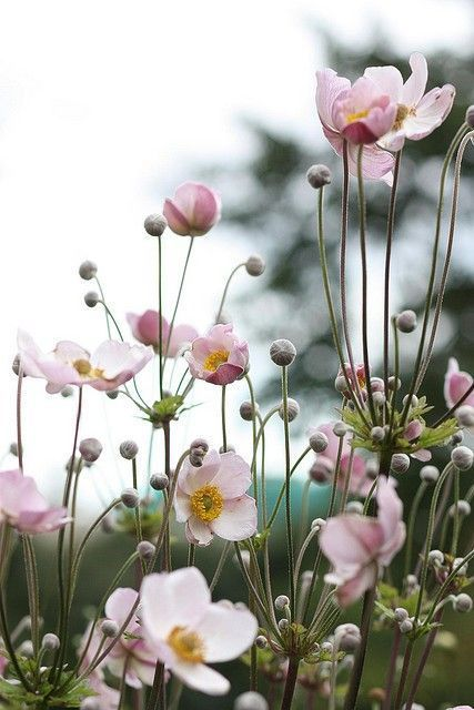 flores 2 - PÁSSAROS no Jardim | 5 PASSOS para Atrair