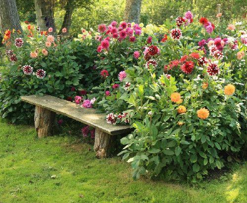 jardim 1 - 12 DICAS de JARDINAGEM que todo Jardineiro PRECISA SABER