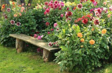 12 DICAS de JARDINAGEM que todo Jardineiro PRECISA SABER