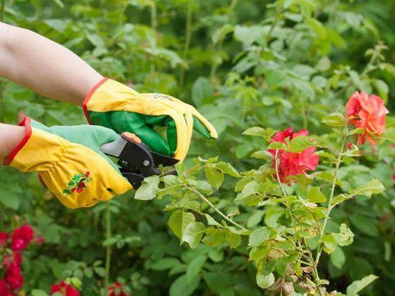 podas - 12 DICAS de JARDINAGEM que todo Jardineiro PRECISA SABER