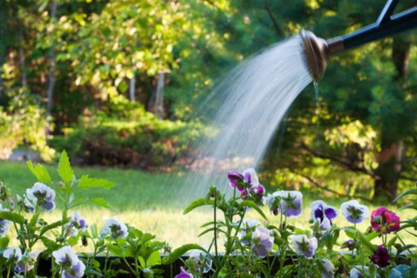 regando - REGAR AS PLANTAS | Quando devo FAZER?