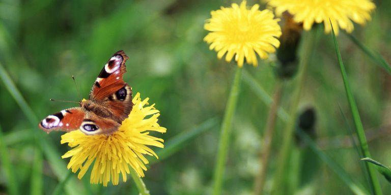 borboletas - 9 FATOS SURPREENDENTES que você não sabia sobre o seu JARDIM