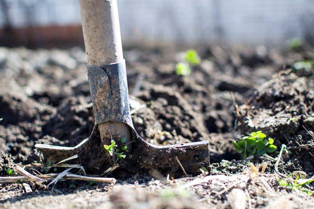 cavando - ROSAS | 10 DICAS de como CULTIVAR