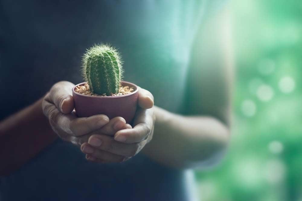como plantar cactos - CACTO Descubra 12 FATOS sobre ele