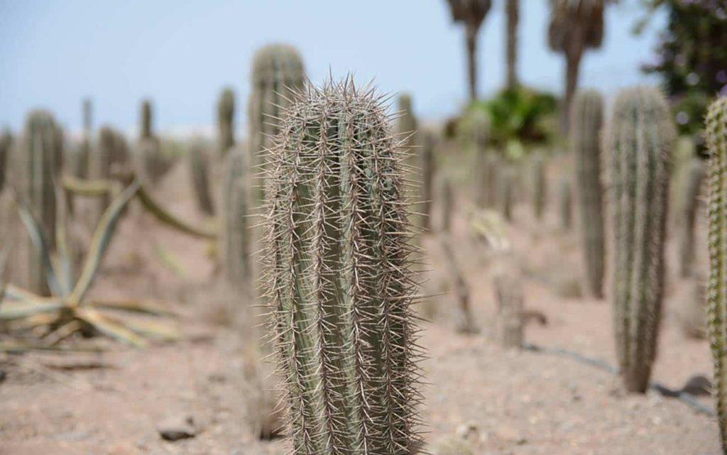 deserto 1024x641 - CACTO Descubra 12 FATOS sobre ele