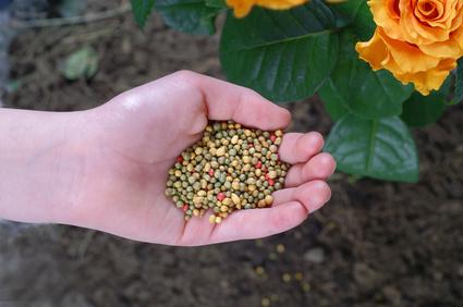 fertilizantes - ROSAS | 10 DICAS de como CULTIVAR